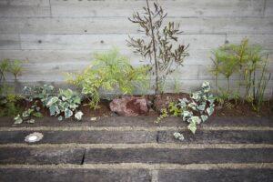 お庭は身近な自然